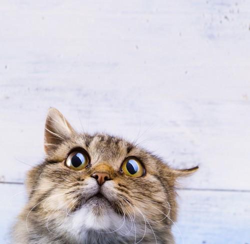 不気味な猫