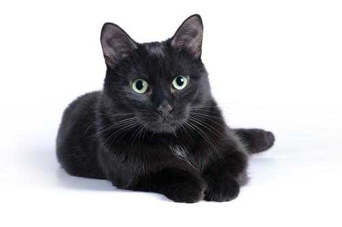 伏せをするグリーンの目の黒猫
