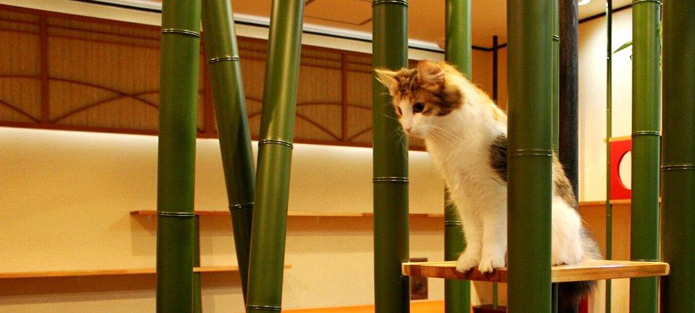 竹の間にいる猫の画像
