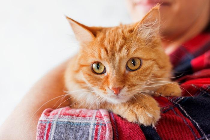 抱きかかえられこちらを見る猫