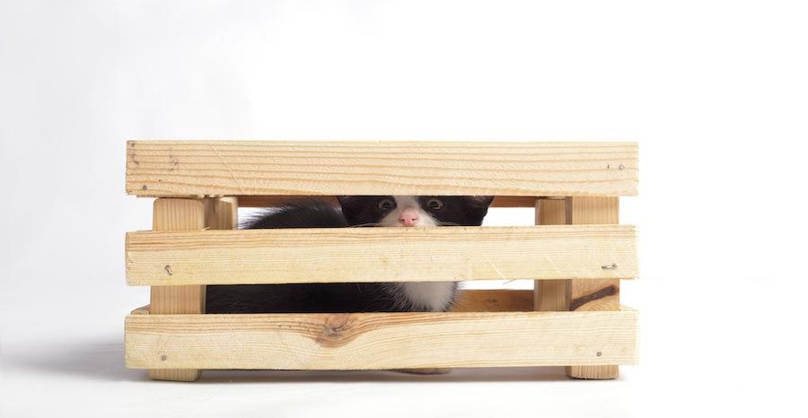 木箱に隠れている子猫