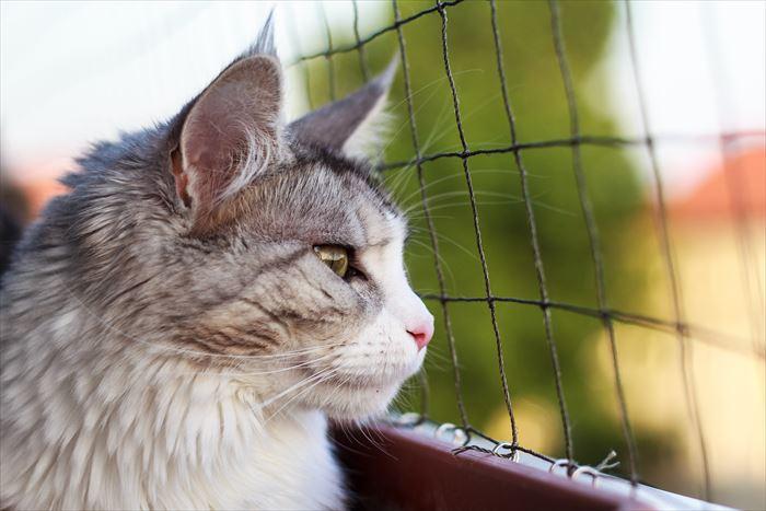 網の前の猫