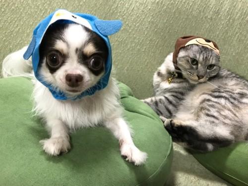ペンギンとカワウソのかぶりもの、犬と猫
