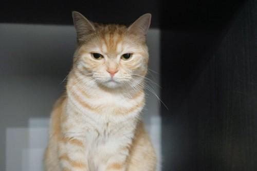 冷めた目の猫
