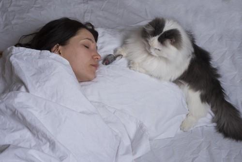 眠る女性の枕元でくつろぐ猫