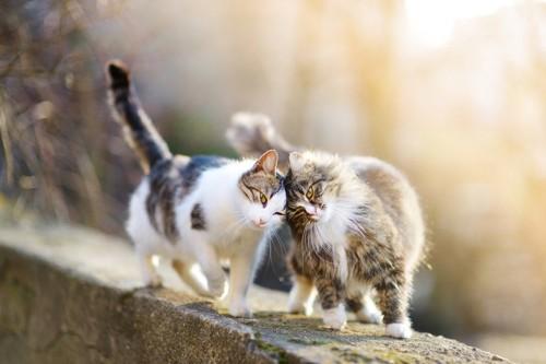 仲良しな猫2匹