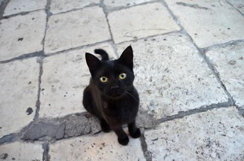 セミを見る猫