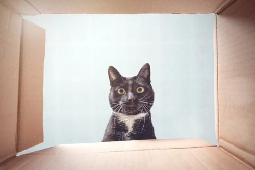 箱を覗いてびっくりしている猫