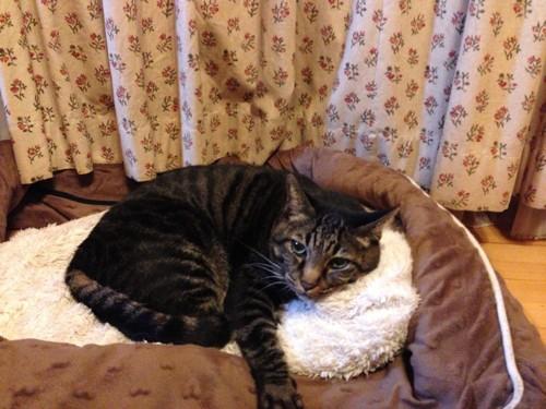 先代猫の写真