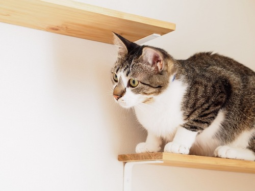 壁に取り付けられたキャットウォークのステップに座る猫
