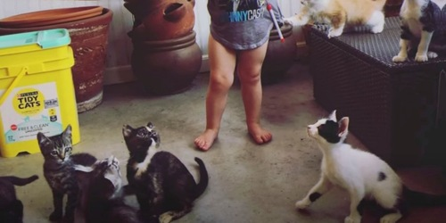 赤ちゃんの足と猫
