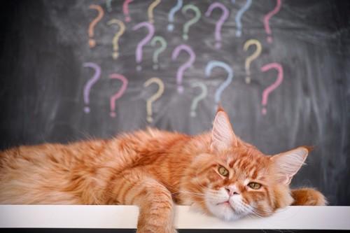 ハテナマークがいっぱいの猫