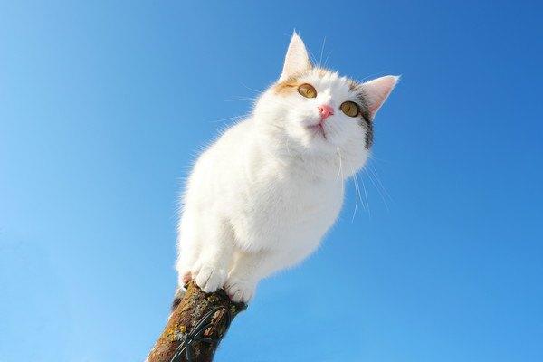 気の上から見下ろす白猫