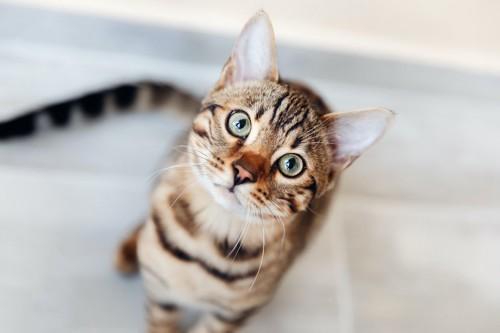 こちらをジッと見上げる猫