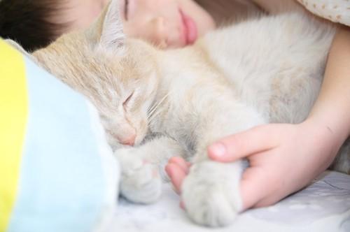 飼い主とくっついて一緒に眠る猫