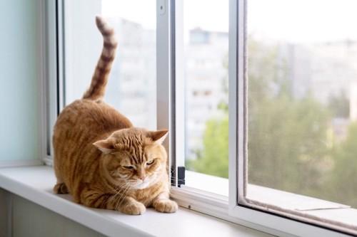 あいた窓と猫
