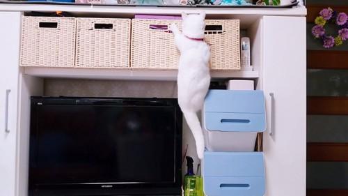 よじ登る猫