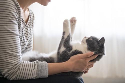 抱かれながら手をあげる猫