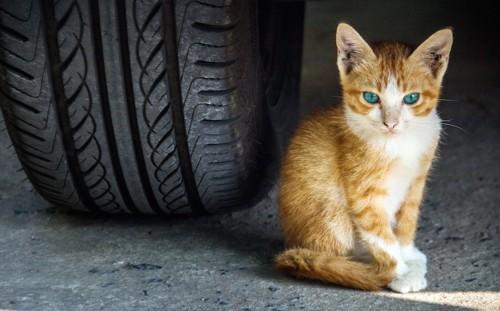 車のタイヤの横に座る子猫