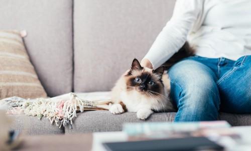 人と一緒にソファに座る猫