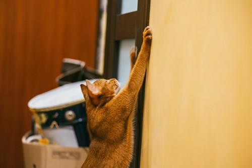 壁に手をついて伸びる猫