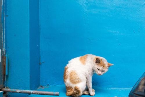痩せ細った猫