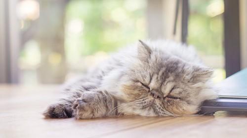 日当たりが良い場所でスヤスヤと眠る猫