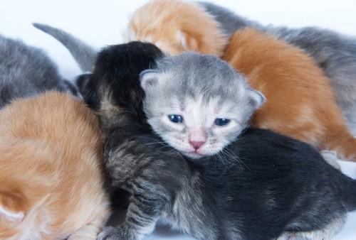 いろんな毛色の子猫