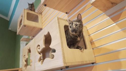 壁のボックスから顔をのぞかせるサビ猫