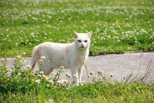 緑の自然の中で立ち止まる猫