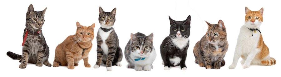 一列に並んだいろんな種類の猫たち