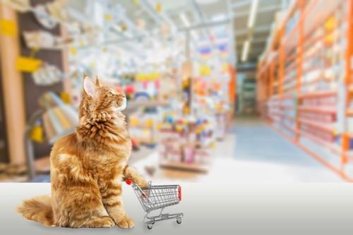 店でカートを持つ猫