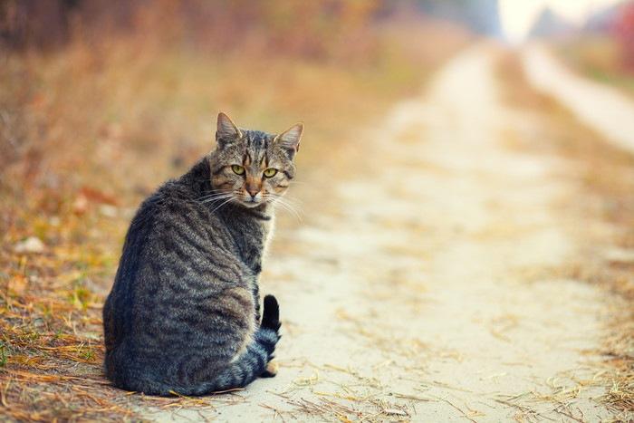 道にいる猫