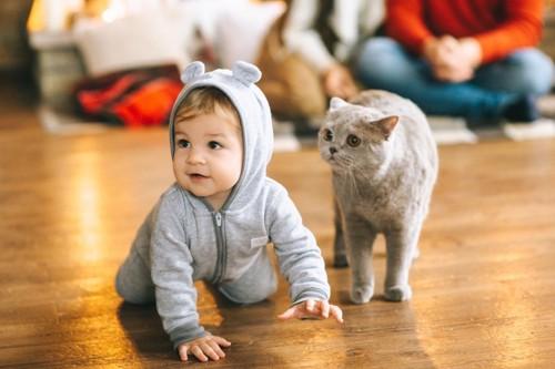 ハイハイする赤ちゃんと猫