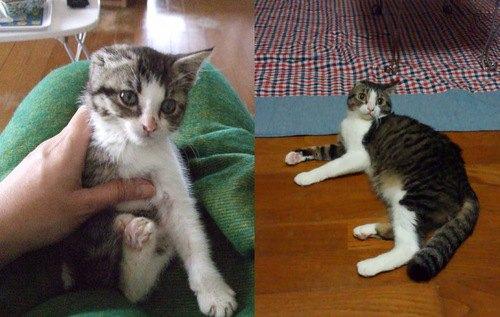 子猫とわんちゃん