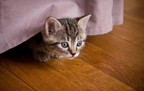 ベッドの下に逃げ込んだ猫