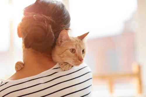 チャトラ猫を抱く女性の後ろ姿