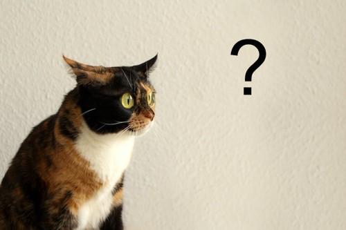 クエスションマークと驚いたような表情の猫