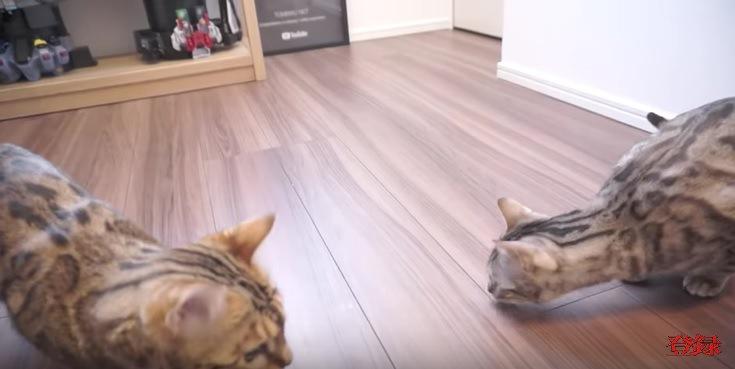 シャボン玉が消えて驚く猫
