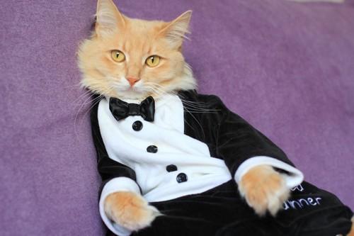黒のタキシードを着て寝そべる猫