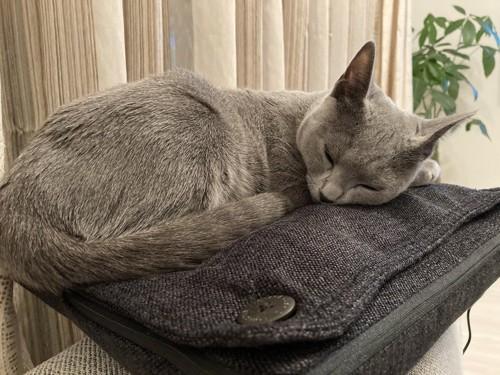 マッサージクッションで寝る猫