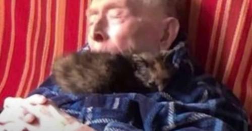 男性の上に子猫