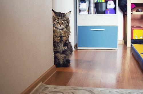 部屋の隅からこちらを見る猫