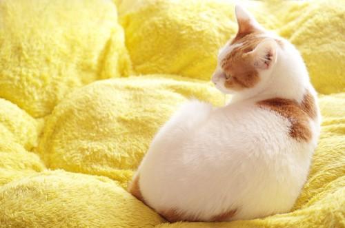 黄色い布団の上で振り返る猫