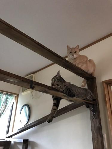 キャットタワーに上った猫