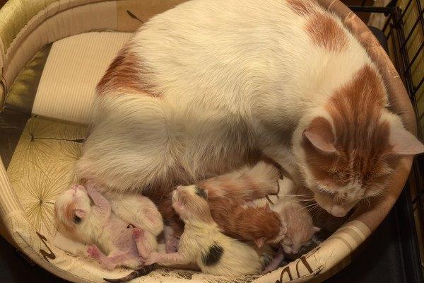 母猫と生まれたばかりの子猫