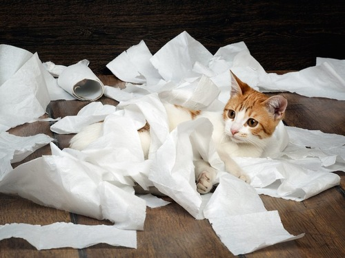 トイレットペーパーで遊ぶ猫