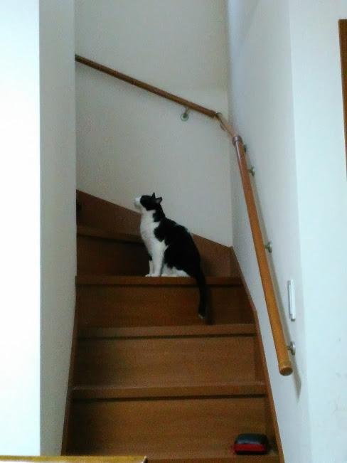 階段に居る猫