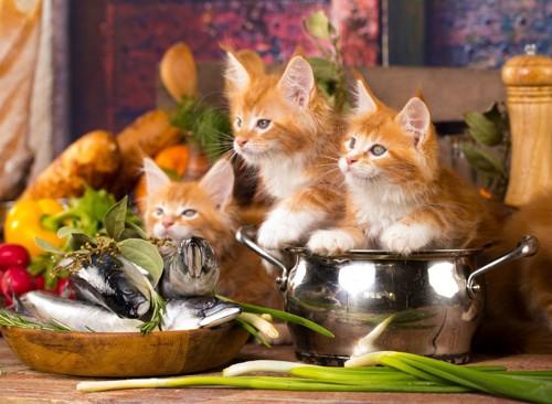 食べ物が気になる猫たち