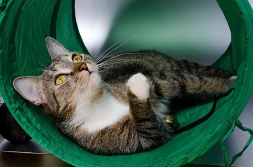 トンネルの中で仰向けになる猫